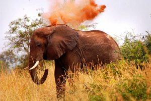 Big Five Tours Elephant