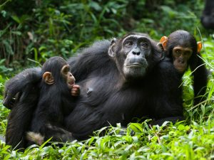 15 Days Uganda Safari Tours Wilderness Adventure