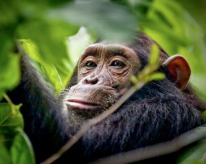 5 Days Gorilla Trekking Wildlife Chimpanzee Safaris