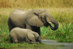 afrika_uganda_murchison-falls-nationalpark_michell-zappaflickr