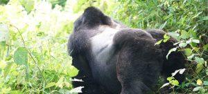 5 Days Gorilla Wildlife Safari Tours