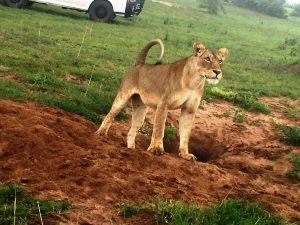 3 Days Murchison Falls Safari | Spectacular Game Safari