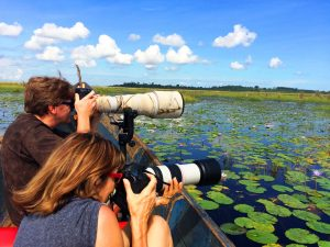 1 day mabamba swamp birding tour