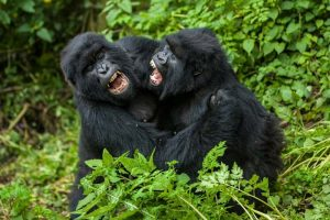 4 Days Gorilla and Queen Wildlife Safari Tour Adventure