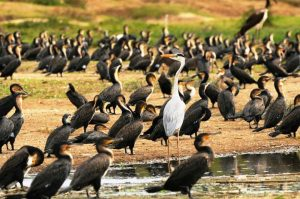 19 Days Birding Uganda Safaris Adventurous