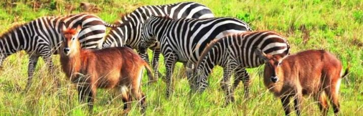 4 Days Kidepo National Park Safari