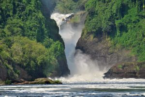 3 Days Murchison Falls Wildlife & Launch Cruise Duiker Uganda Safaris