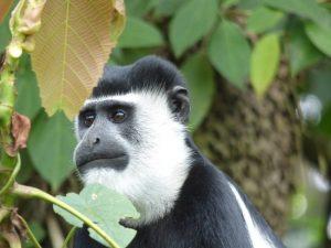 13 Days Best Uganda Safari