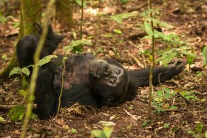 4 Days Gorilla Wildlife Safari