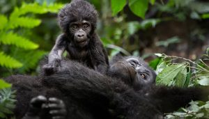 4 Days Lake Mburo Wildlife Bwindi Gorilla Tour