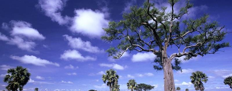 murchison falls trees