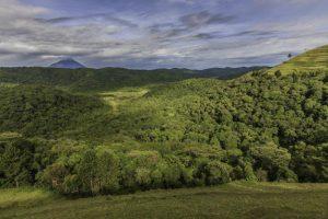 5 Days Gorilla Tracking Bwindi Impenetrable National Park