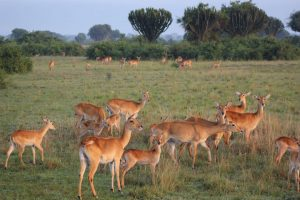 3 days Wildlife in lake Mburo and Queen Elizabeth Safari