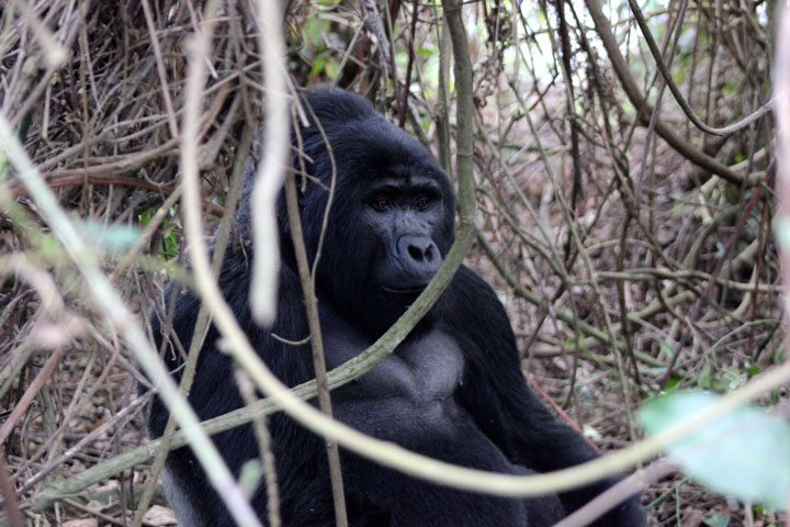 Uganda Safaris, Uganda Tours, Gorilla Safaris, Wildlife