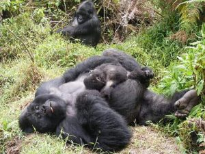 5 days Wildlife Queen Bwindi Gorilla Tour