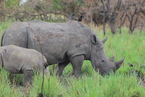 3 Days Akagera Wildlife Safari | Akagera NP Rwanda