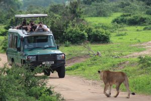 4 Days Fly Safari Kidepo Valley National Park
